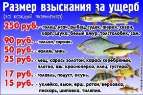Штраф за ловлю рыбы сетями в 2020 году: размер и сумма наказания, как оплачивать