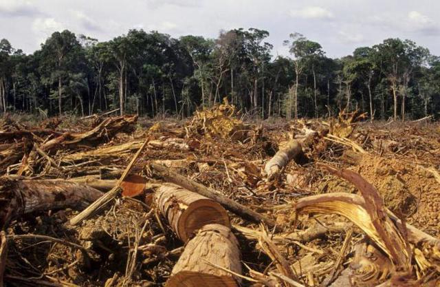 Штраф за вырубку деревьев, за срубленное дерево: размер и сумма наказания, оплата